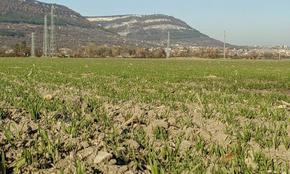 Земеделските стопани в Шуменско засяха над 634 хил. декара с есенници