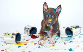 Куче се боядиса в синьо за 4 дни, след като се навъргаля в картина