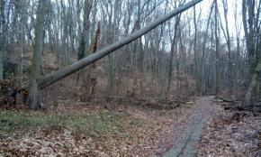 Надвиснало дърво