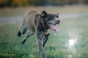 Изгубено е мъжко ловджийско куче