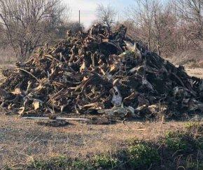 Екипи от община Велики Преслав почистиха нерегламентирано сметище с животински отпадъци