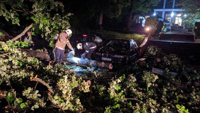 Дърво е паднало върху автомобили на паркинга до хотел Орбита в Шумен