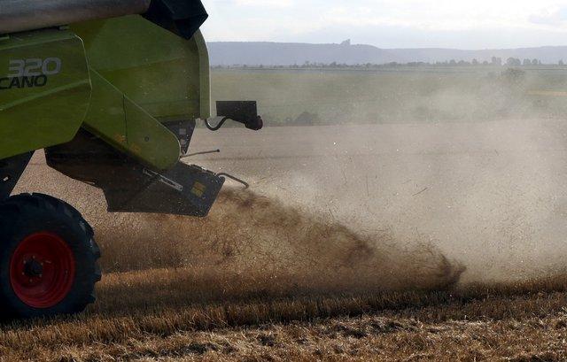 Ожънаха ечемика и 71% от пшеницата, добивите много по-ниски от миналогодишните