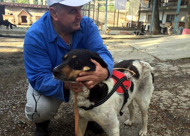 """25 кучета и 3 котета отпътуваха вчера за Германия, Сн.: Приют """"Тонка Петрова"""""""